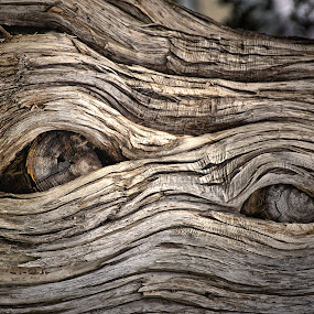 The Eyes Have It by Ray Ebersole - Nature Up Close Trees & Bushes ( gilcrease, in plane sight, photo walk )