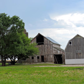 Barns,old and new by Linda McCormick - Buildings & Architecture Other Exteriors ( farm, iowa, old an new barns, barns, country )