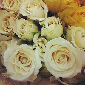 Baby roses #flower by Melissa Rolston - Instagram & Mobile Instagram