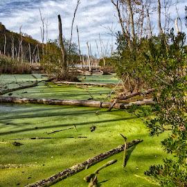 Flag Pond Park by Debra Branigan - Landscapes Waterscapes ( maryland, waterscapes, landscapes, photography )