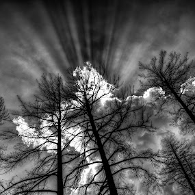 Out of the Ashes by Roch Hart - Landscapes Forests ( clouds, forest fire, new mexico, trees, cloud, forest, rays, roch hart, nm, black and white, b and w, landscape, b&w, monotone, mono-tone )