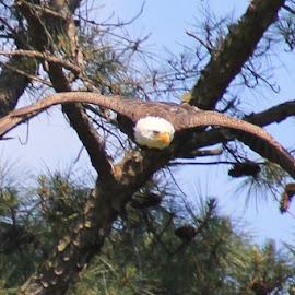 In Flight  by Robin Hennon - Animals Birds