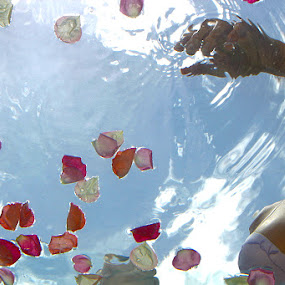 Fish's eye view by Anthony Allen - People Fashion ( brassiere, lingerie, blue sky, bust, petals, bra, brunette, rose petals )