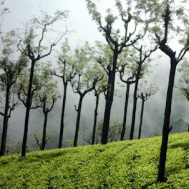 by Phani Kondru - Nature Up Close Gardens & Produce