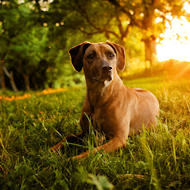 Kyra - between dark and light by Lukáš Lang - Animals - Dogs Portraits