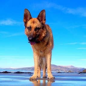 Bobo by Angel Weller - Animals - Dogs Portraits ( blue.water, mountains, beach, dog )