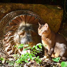 Mocha by Anita South - Animals - Cats Portraits (  )