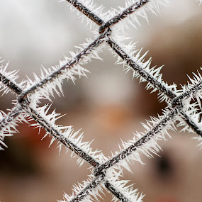 Frozen wires by Ovidiu Caba - Abstract Patterns ( fence, winter, wire, ice, frozen )