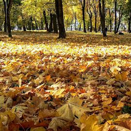 04 by Vygintas Domanskis - City,  Street & Park  City Parks ( leave, yellow, cityscape, city park, autumn, colors )