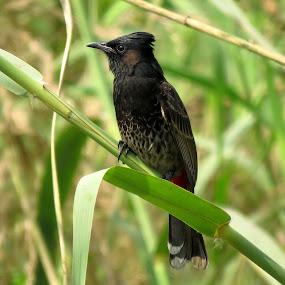 Bird's world by Mainak Adak - Animals Birds ( bird shots, bird photos, wildlife, nature close up, bird photography )