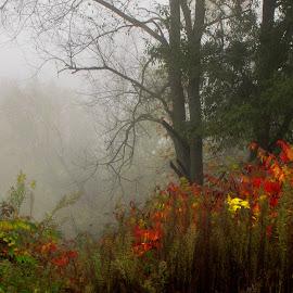 by Sandy Fetter - Landscapes Prairies, Meadows & Fields