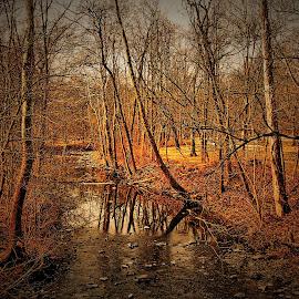Creek  by Darrell Tenpenny - Digital Art Places ( stream, waer, park, creek, woods )