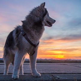No fear  by George Minea - Animals - Dogs Playing ( sunset, lake, puppy, landscape, dog )