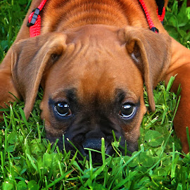 I See You by Todd Klingler - Animals - Dogs Puppies