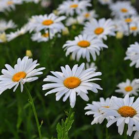 by Jana Kubínová - Flowers Flowers in the Wild