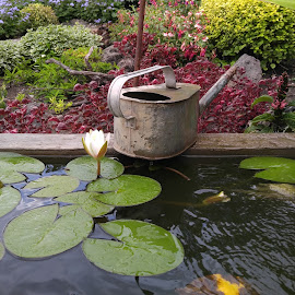 The watering can was just begging for a picture! by Pearl Correia - Nature Up Close Gardens & Produce ( water, composition, random, garden, lotus flower )