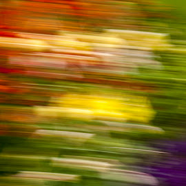 Herbaceous Border by Martin Davis - Abstract Light Painting ( colour, intentional camera movement, abstarct, flowers, icm )