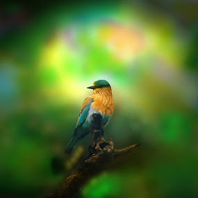 Low Light,Birds, Tree, Indian Roler by Sudipta Mukhopadhyay - Novices Only Wildlife ( lonly bird )