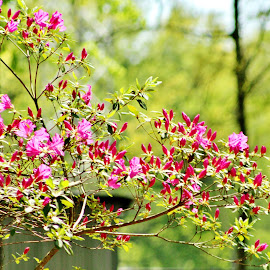 Shades of Spring by Stacy Trevathan - Nature Up Close Trees & Bushes ( nature, bushes, flora, outdoors, landscape, flowers, shrubs )