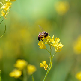 Working by Margareth Perfoncio - Nature Up Close Gardens & Produce ( work, colorful, yellow, flowers, light )