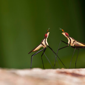 Let's Tango by Nadzli Azlan - Animals Insects & Spiders
