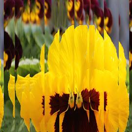 Pansy by Bozica Trnka - Digital Art Abstract ( art, pansy, yellow, digital, flower,  )
