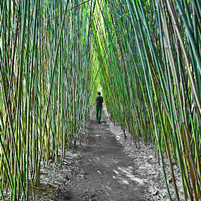 Bamboo Walk by Petra Bensted - Landscapes Prairies, Meadows & Fields ( bamboo, person, nature, green, path, man )