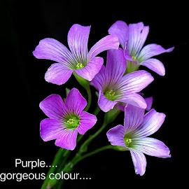 Purple...  by Asif Bora - Typography Quotes & Sentences
