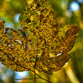 October Day by Marco Bertamé - Nature Up Close Leaves & Grasses ( autumn, fall, october, yellow, leaf )