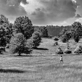 Over Meadow by Nenad Borojevic Foto - Landscapes Prairies, Meadows & Fields ( field, meadows, praries, fields, meadow )