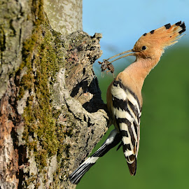 by Davorin Munda - Animals Birds