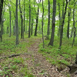 The long  easy trail coming down.  5/16/15 by Cameron Clark - Landscapes Forests