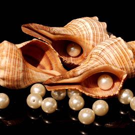 conch seashells by Adjie Tjokrosoedarmo - Artistic Objects Still Life ( conch, pearls, sea, beach, seashells )