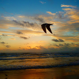 Morning Flight by Corey Williamson - Landscapes Beaches ( clouds, bird, water, nature, waves, colors, ocean, sunrise )