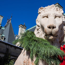 Guardian of the House by Teresa Solesbee - Buildings & Architecture Statues & Monuments ( lion statue, mansion, asheville, biltmore )
