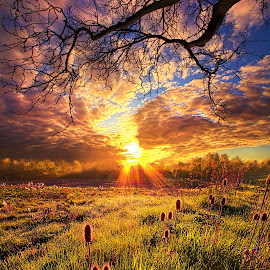 All The World Was Right by Phil Koch - Landscapes Prairies, Meadows & Fields ( vertical, farmland, travel, yellow, storm, leaves, rustic, love, sky, tree, nature, autumn, weather, perspective, light, orange, twilight, art, agriculture, horizon, portrait, environment, dawn, serene, trees, lines, natural light, wisconsin, ray, road, landscape, phil koch, spring, sun, photography, farm, life, path, horizons, inspired, clouds, office, park, scenic, morning, shadows, field, red, blue, sunset, amber, peace, meadow, summer, beam, earth, sunrise, garden )