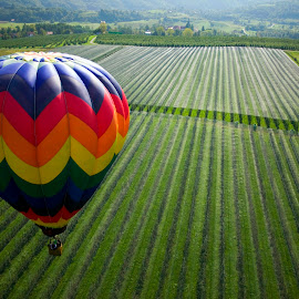 Over the fields by Mitja Mladkovic - Landscapes Prairies, Meadows & Fields ( hot air balloon, vineyard, colors, green, meadows, morning, sunlight, balloon, flying, nature, fly, horizontal, above, high, fields )