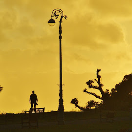 Statue ? by Ron Adams - City,  Street & Park  Skylines ( sunset, trees, silhouettes, golden, lamp posts )