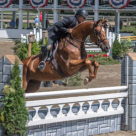 Making the Jump by Mike Watts - Sports & Fitness Other Sports ( jumping, horse, 2016, horse show, blowing rock )