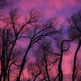 by Shelly Nichols Hellbusch - Landscapes Sunsets & Sunrises ( kaidenbdaysunset )