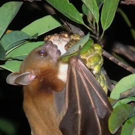 Bat  by Eka Setyowati - Animals Other