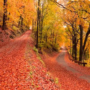 Autumn_02897.jpg