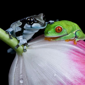 Friends by Angi Wallace - Animals Amphibians