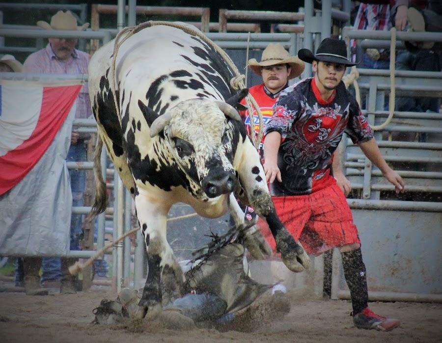 Twist And Shout by Brian  Shoemaker  - Sports & Fitness Rodeo/Bull Riding ( gocreate, rank, cowboy, eatdirt, bullrider, rodeo, bull,  )