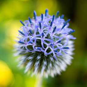 by Rany Haj - Flowers Flower Gardens ( botanical garden, flowers )