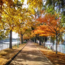 Autum by Elisei Noata - City,  Street & Park  City Parks ( autumn, city )