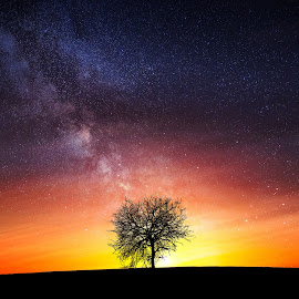 Milky way by Bess Hamiti - Nature Up Close Trees & Bushes ( lone, yellow, leaf, spring, blossom, pose, sky, tree, shadow, foliage, lifestyle, timing, lonely, light, flower, clouds, grass, heaven, green, beautiful, horizon, relaxation, relaxing, sunlight, rural, field, background, outdoors, meadow, summer )
