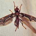 Waved Light Fly