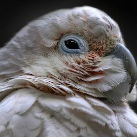 by Renos Hadjikyriacou - Animals Birds