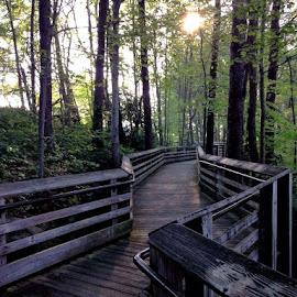 New River Gorge overlook by Sarah Keller - Novices Only Landscapes